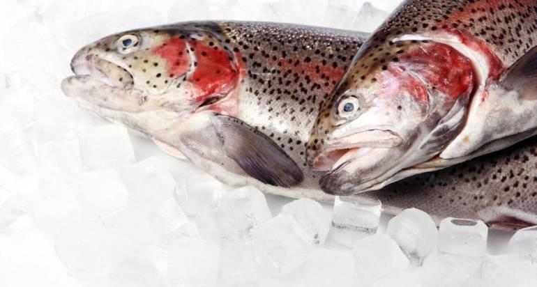 Ознаки якісної замороженої риби